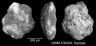To NMNH Paleobiology Collection (IRN 10040232)