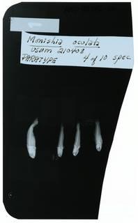 To NMNH Extant Collection (Monishia oculata RAD102262-001)