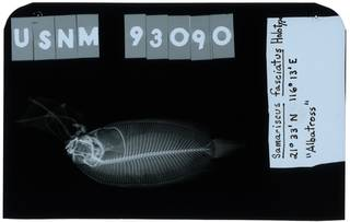 To NMNH Extant Collection (Samariscus fasciatus RAD103811-001)