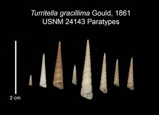 To NMNH Extant Collection (IZ MOL 24143 Paratypes Shell plate)