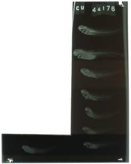 To NMNH Extant Collection (Entomacrodus cadenati RAD103061-001)