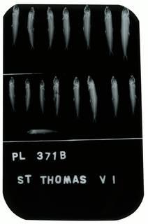 To NMNH Extant Collection (Jenkinsia lamprotaenia RAD100753-001)