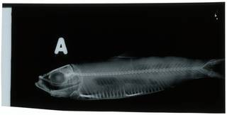 To NMNH Extant Collection (Lile RAD100755-001)