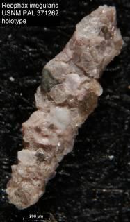 To NMNH Paleobiology Collection (Reophax irregularis USNM PAL 371262 holotype)