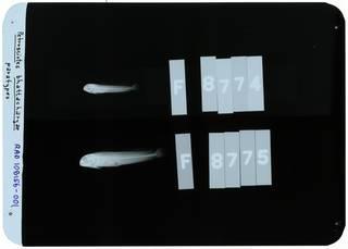 To NMNH Extant Collection (Petroscirtes bhattacharyae RAD108156-001)