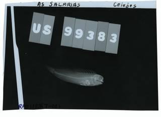 To NMNH Extant Collection (Salarias ceramensis RAD108367-001)