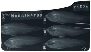To NMNH Extant Collection (Jaydia truncata RAD105092-001)