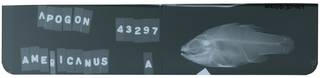 To NMNH Extant Collection (Apogon americanus RAD105130-001)
