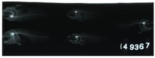 To NMNH Extant Collection (Jaydia ellioti RAD105200-001)