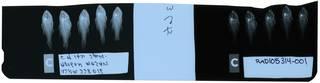 To NMNH Extant Collection (Apogon mosavi RAD105314-001)