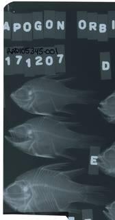 To NMNH Extant Collection (Sphaeramia orbicularis RAD105345-001)