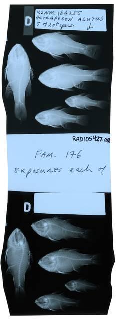 To NMNH Extant Collection (Astrapogon alutus RAD105427-002)