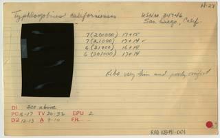 To NMNH Extant Collection (Typhlogobius californiensis RAD108491-001B)
