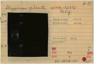 To NMNH Extant Collection (Ilypnus gilberti RAD108508-001B)