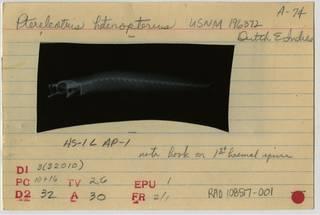 To NMNH Extant Collection (Ptereleotris heteropterus RAD108517-001B)