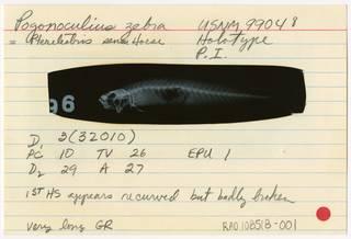 To NMNH Extant Collection (Pogonoculius zebra RAD108518-001B)