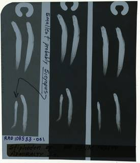 To NMNH Extant Collection (Eleotridae RAD108533-001)