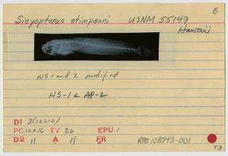 To NMNH Extant Collection (Sicyopterus stimpsoni RAD108543-001B)