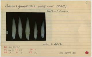 To NMNH Extant Collection (Awaous lateristriga RAD108554-001B)