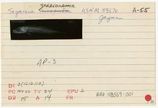 To NMNH Extant Collection (Sagamia geneionema RAD108569-001B)