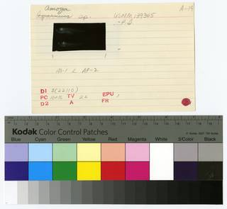 To NMNH Extant Collection (Amoya  RAD108615-002B)