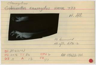 To NMNH Extant Collection (Ctenogobius smaragdus RAD108622-001B)
