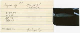 To NMNH Extant Collection (Hazeus RAD108649-001B)