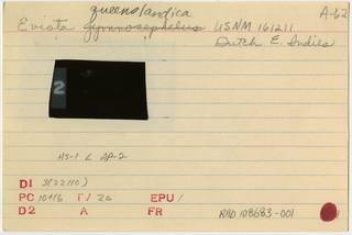 To NMNH Extant Collection (Eviota queenslandica RAD108683-001B)