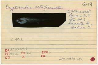To NMNH Extant Collection (Cryptocentrus octofasciatus RAD108711-001B)