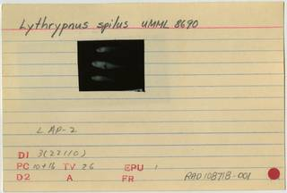To NMNH Extant Collection (Lythrypnus spilus RAD108718-001B)