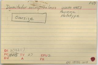 To NMNH Extant Collection (Dormitator microphthalmus RAD108783-001B)