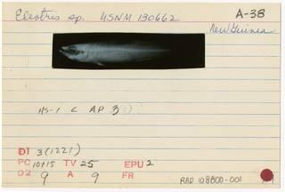 To NMNH Extant Collection (Eleotris fusca RAD108800-001B)