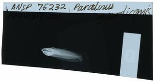 To NMNH Extant Collection (Paraclinus grandicomis RAD111317-001)