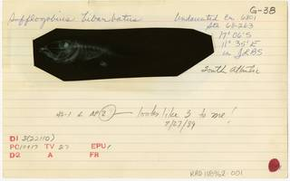 To NMNH Extant Collection (Sufflogobius bibarbatus RAD108962-001B)