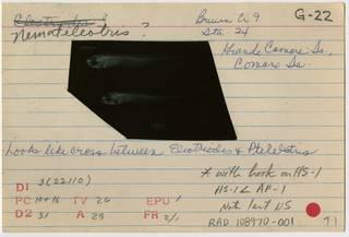 To NMNH Extant Collection (Nemateleotris RAD108970-001B)