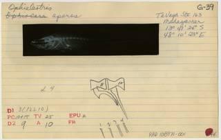 To NMNH Extant Collection (Giuris margaritacea RAD108971-001B)