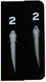 To NMNH Extant Collection (Gobulus crescentalis RAD108976-002)