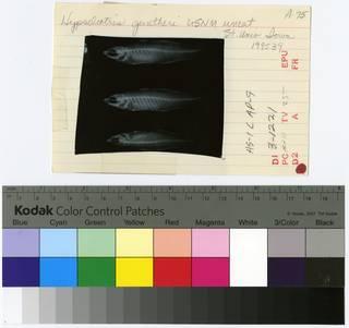 To NMNH Extant Collection (Hypseleotris guntheri RAD109055-001B)