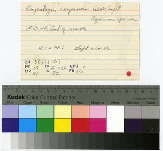 To NMNH Extant Collection (Oxymetopon compressus RAD109059-001B)