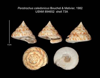 To NMNH Extant Collection (IZ MOL 894652 Shell plate specimen1)