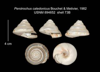 To NMNH Extant Collection (IZ MOL 894652 Shell Plate specimen2)