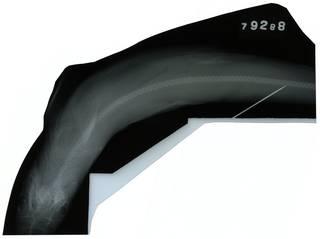 To NMNH Extant Collection (Rhizoprionodon lalandii RAD100910-001)