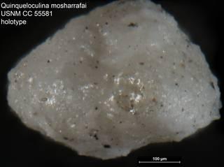 To NMNH Paleobiology Collection (Quinqueloculina mosharrafai USNM CC 55581 holotype ap)