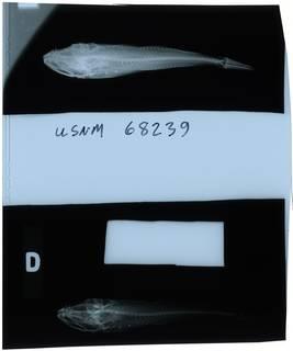 To NMNH Extant Collection (Bero zanclus RAD112104-001)