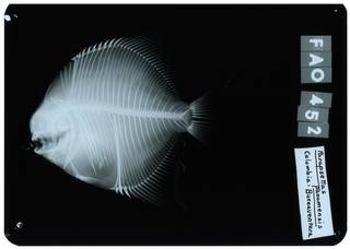 To NMNH Extant Collection (Parapsettus panamensis RAD112178-001)