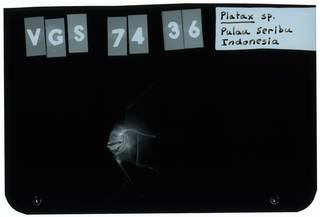 To NMNH Extant Collection (Platax RAD112184-001)