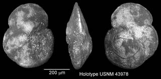 To NMNH Paleobiology Collection (IRN 3144242)