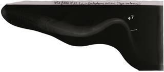To NMNH Extant Collection (Pristiophorus owenii RAD109809-001)