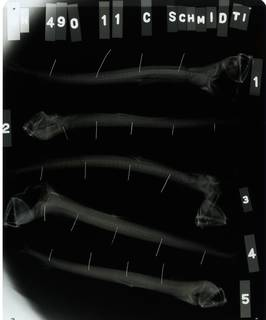 To NMNH Extant Collection (Chauliodus schmidti RAD113388-001)