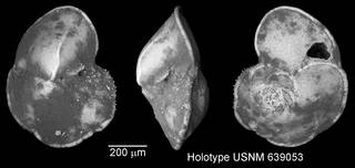 To NMNH Paleobiology Collection (IRN 3148394)